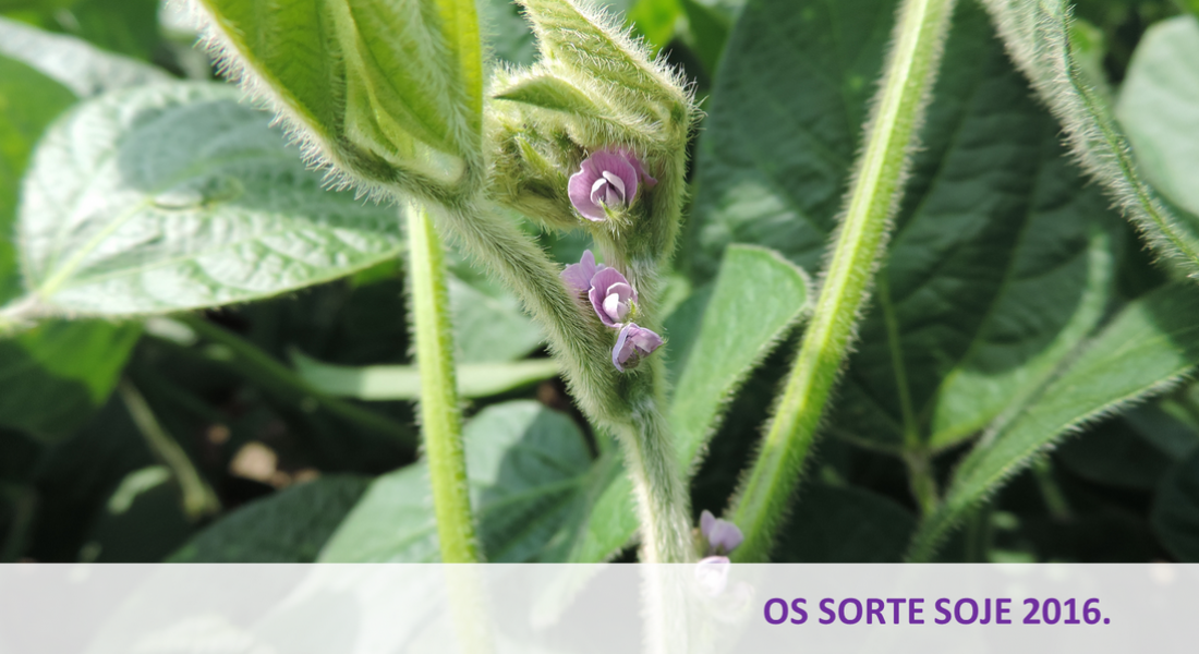 Catalogue of Soybean and Sunflower 2017